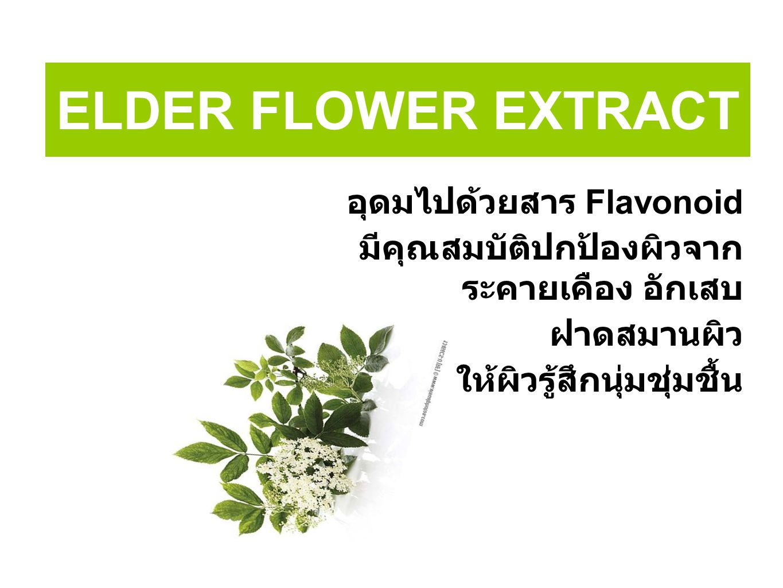 ELDER FLOWER EXTRACT อุดมไปด้วยสาร Flavonoid