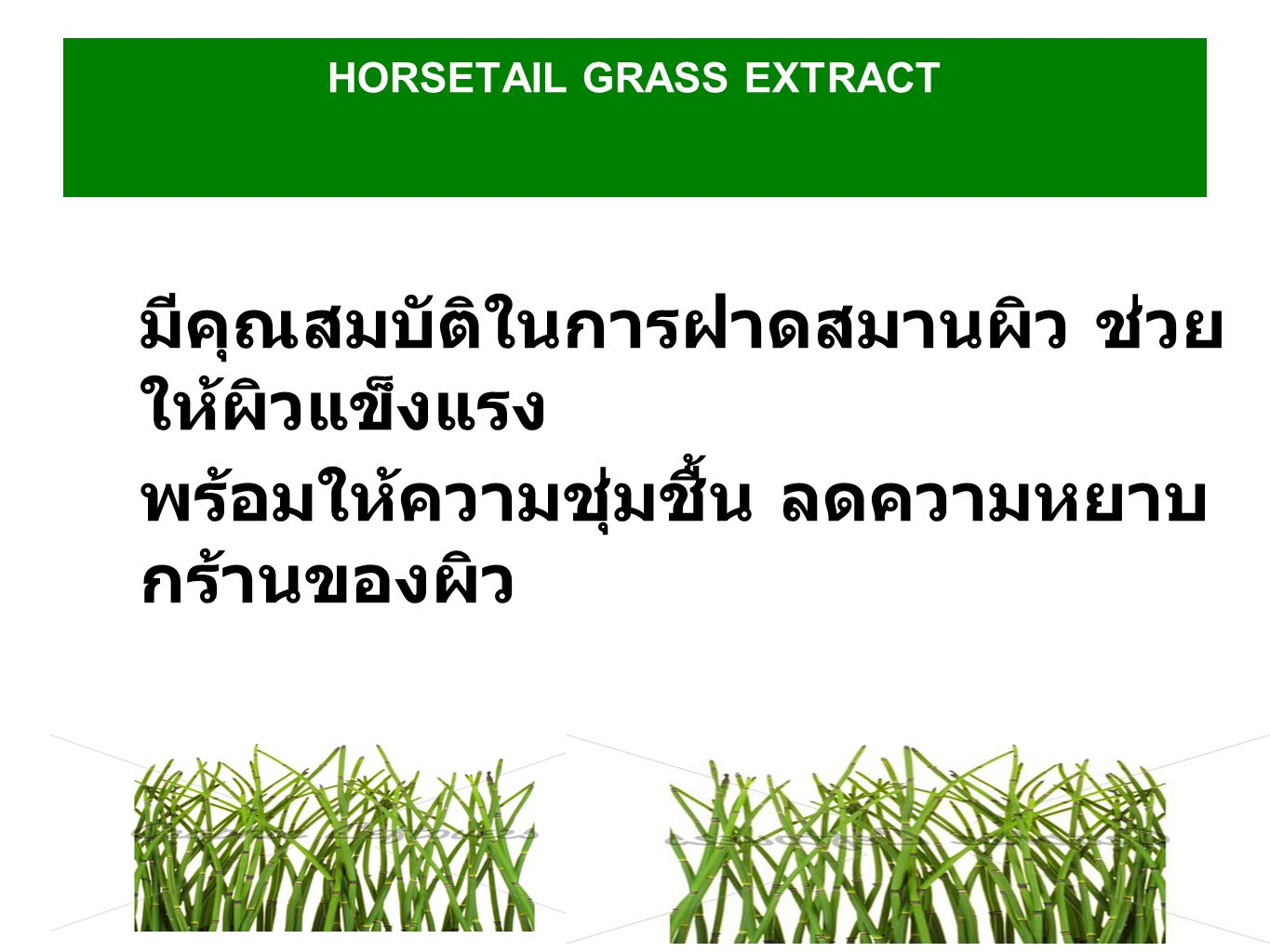 HORSETAIL GRASS EXTRACT