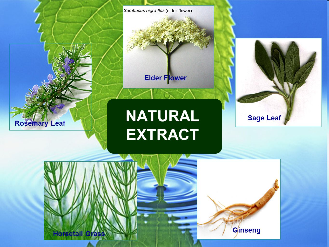 NATURAL EXTRACT Elder Flower Sage Leaf Rosemary Leaf Ginseng