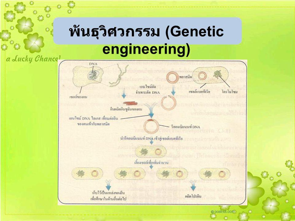 พันธุวิศวกรรม (Genetic engineering)