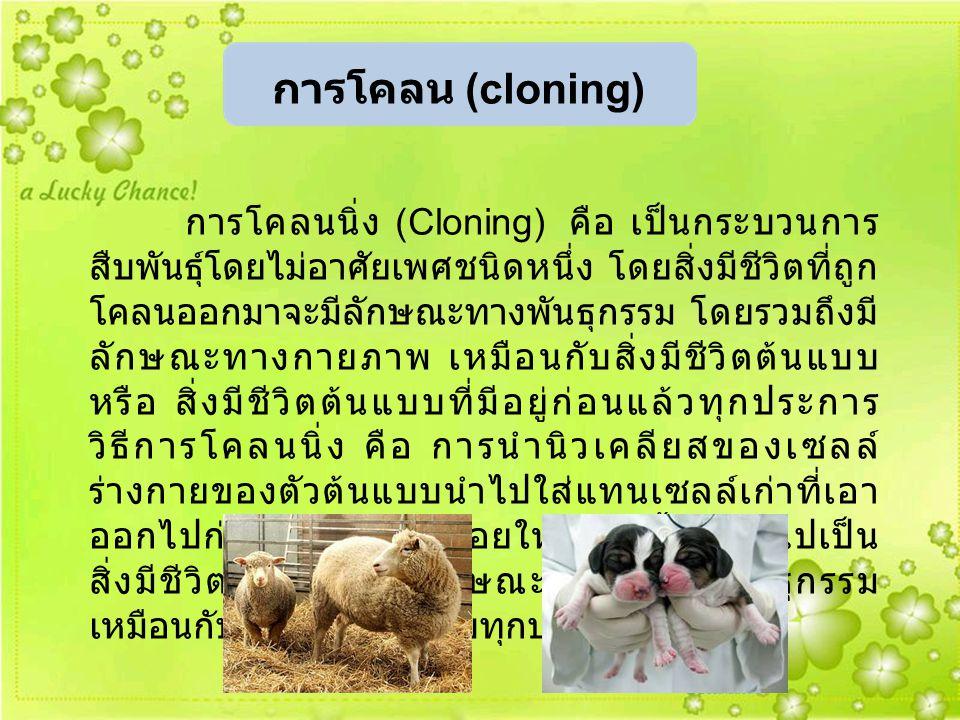 การโคลน (cloning)