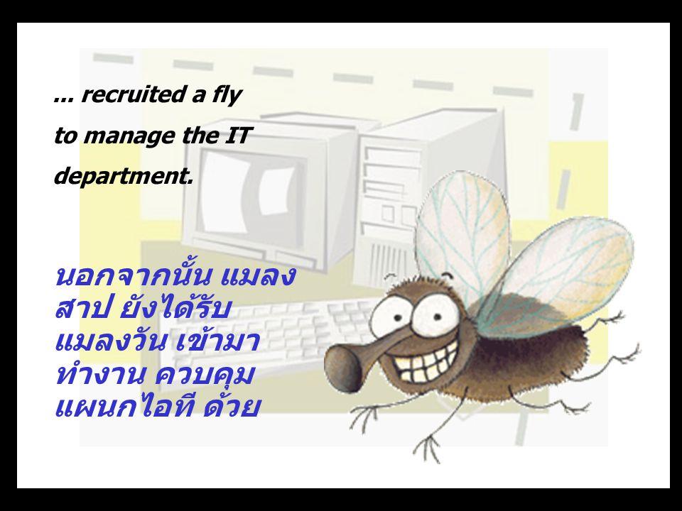 นอกจากนั้น แมลงสาป ยังได้รับแมลงวัน เข้ามาทำงาน ควบคุมแผนกไอที ด้วย