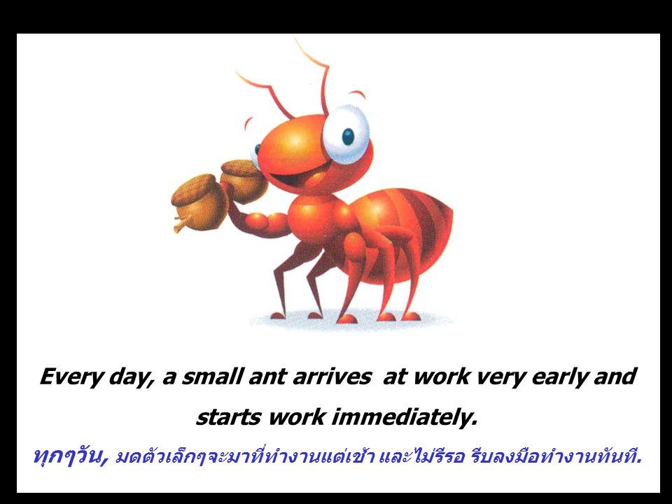 ทุกๆวัน, มดตัวเล็กๆจะมาที่ทำงานแต่เช้า และไม่รีรอ รีบลงมือทำงานทันที.