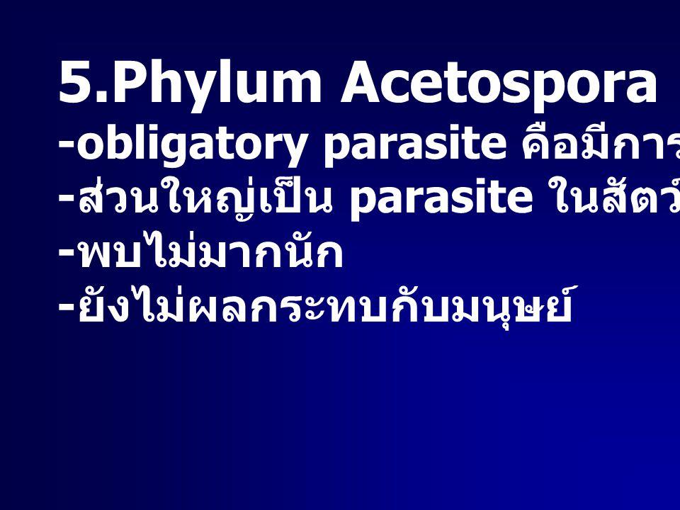 5.Phylum Acetospora -obligatory parasite คือมีการสร้างสปอร์