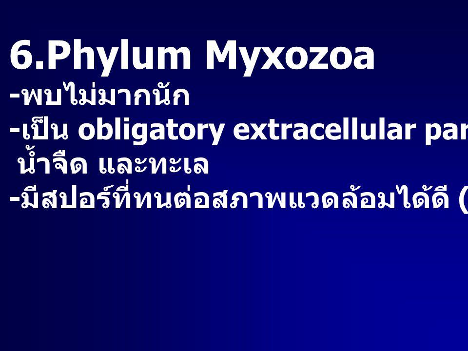 6.Phylum Myxozoa -พบไม่มากนัก