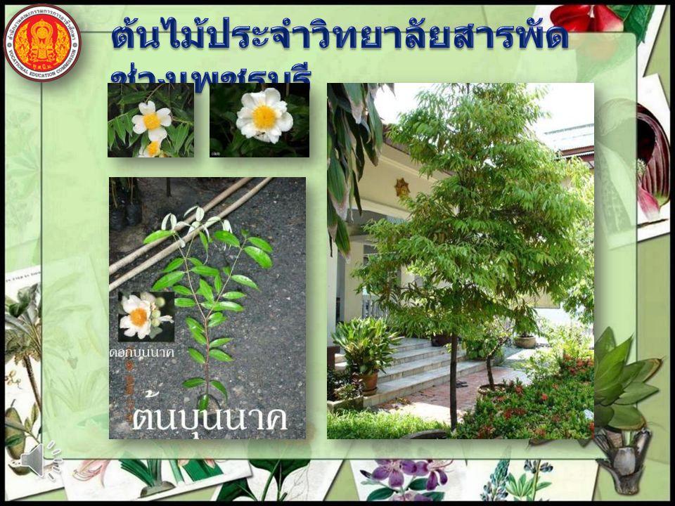 ต้นไม้ประจำวิทยาลัยสารพัดช่างเพชรบุรี