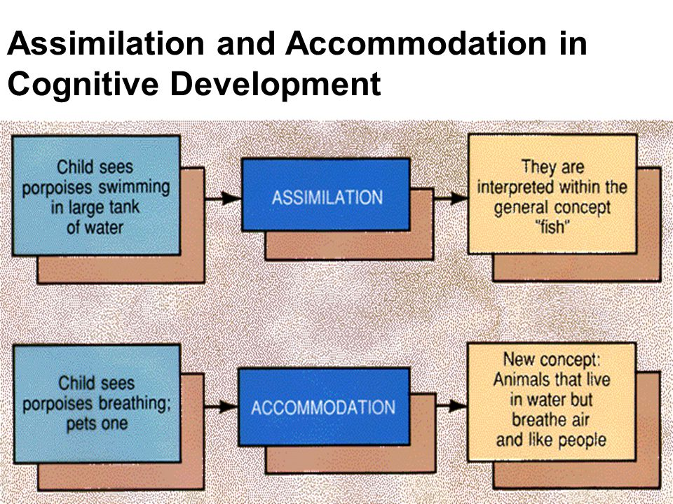 Assimilation and Accommodation in Cognitive Development