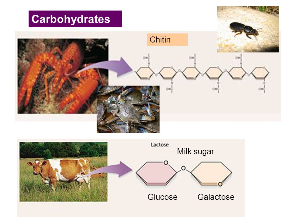 Carbohydrates Chitin Milk sugar Glucose Galactose