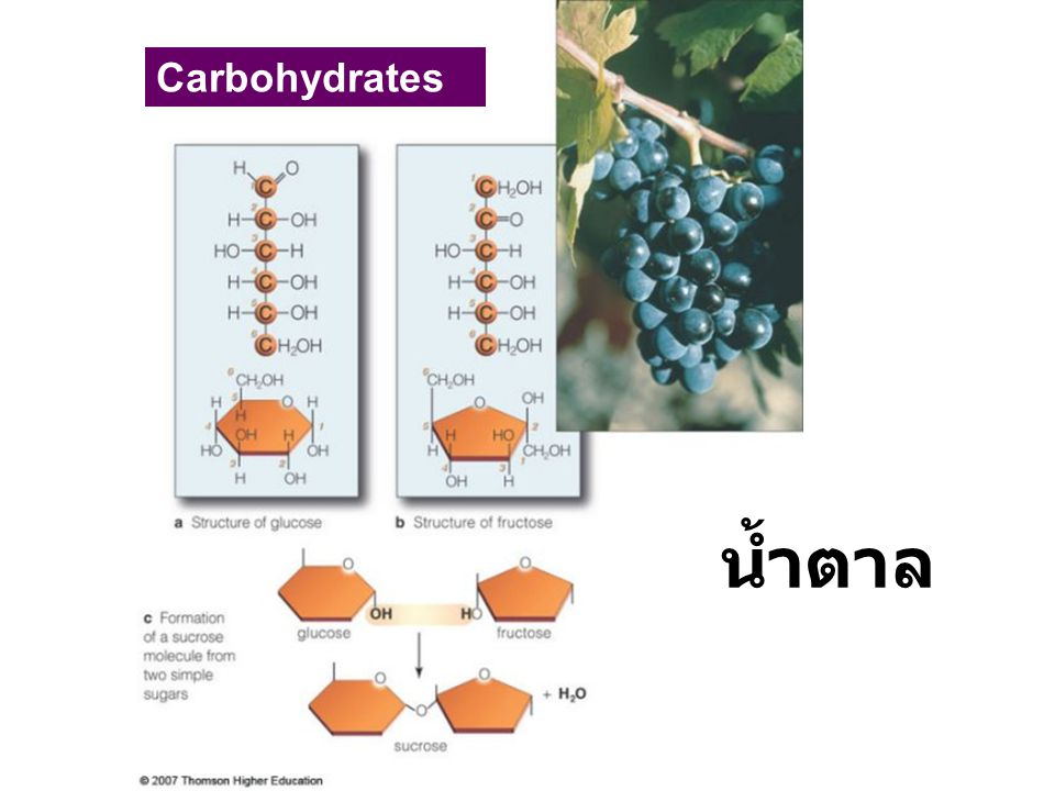 Carbohydrates น้ำตาล