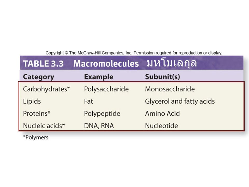 มหโมเลกุล