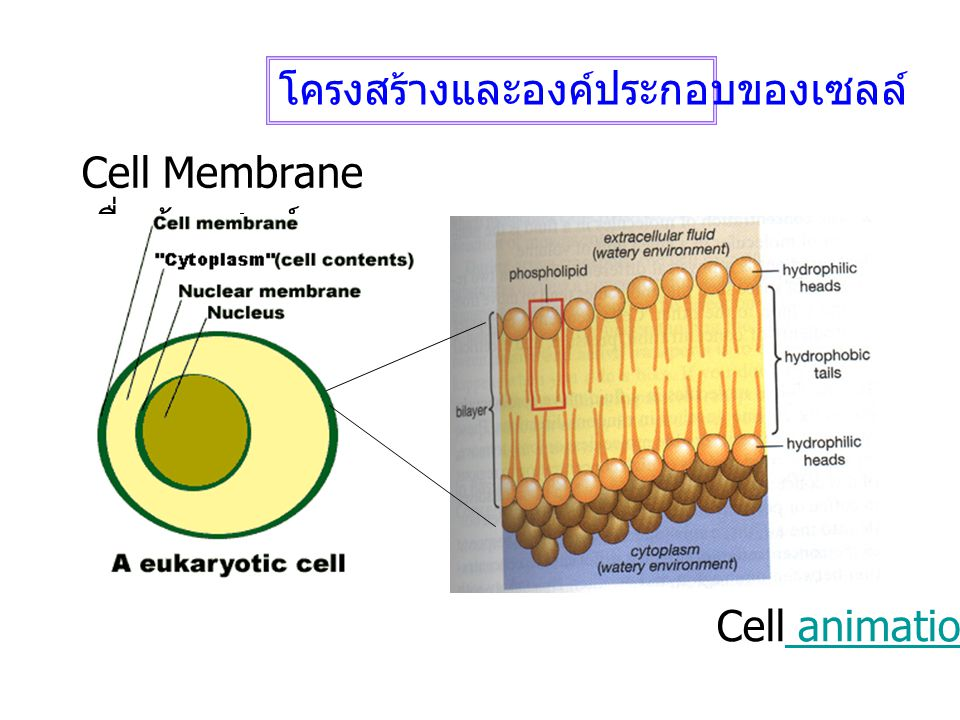 โครงสร้างและองค์ประกอบของเซลล์