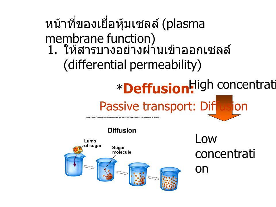 หน้าที่ของเยื่อหุ้มเซลล์ (plasma membrane function)