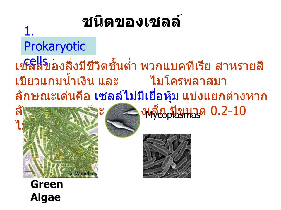 ชนิดของเซลล์ 1. Prokaryotic cells :