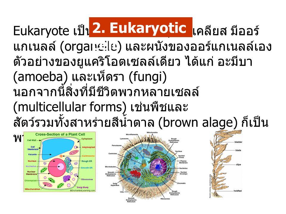 2. Eukaryotic cell