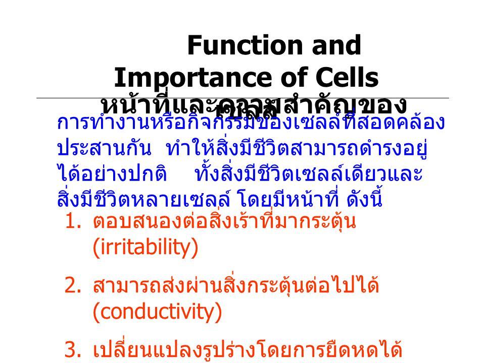 Function and Importance of Cells หน้าที่และความสำคัญของเซลล์