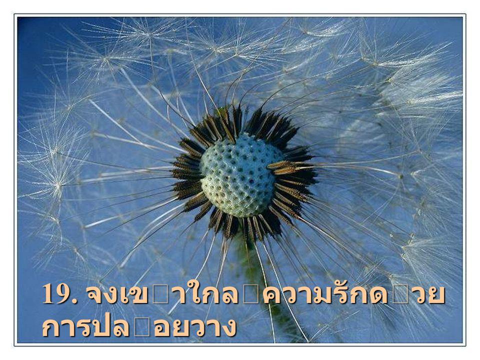 19. จงเขาใกลความรักดวยการปล อยวาง