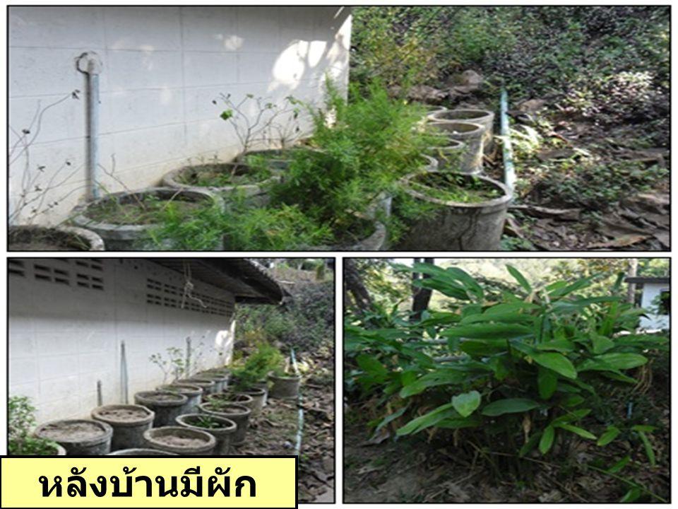 หลังบ้านมีผักสวนครัว