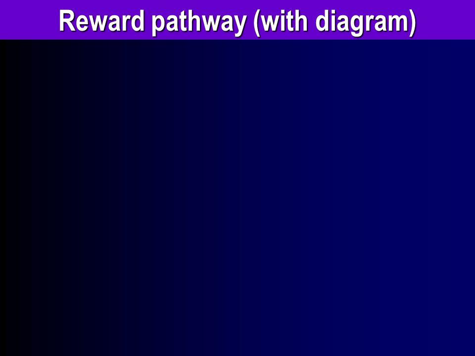 Reward pathway (with diagram)
