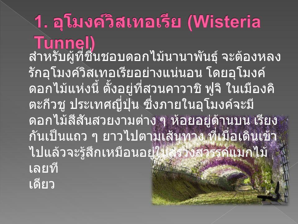 1. อุโมงค์วิสเทอเรีย (Wisteria Tunnel)