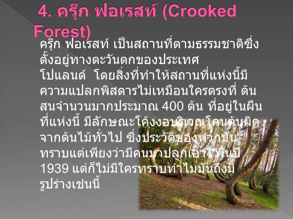 4. ครุ๊ก ฟอเรสท์ (Crooked Forest)