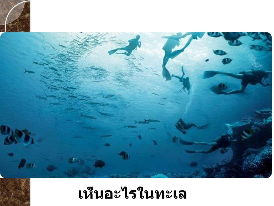 เห็นอะไรในทะเล