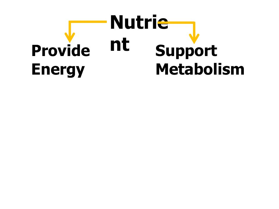 Nutrient Provide Energy Support Metabolism