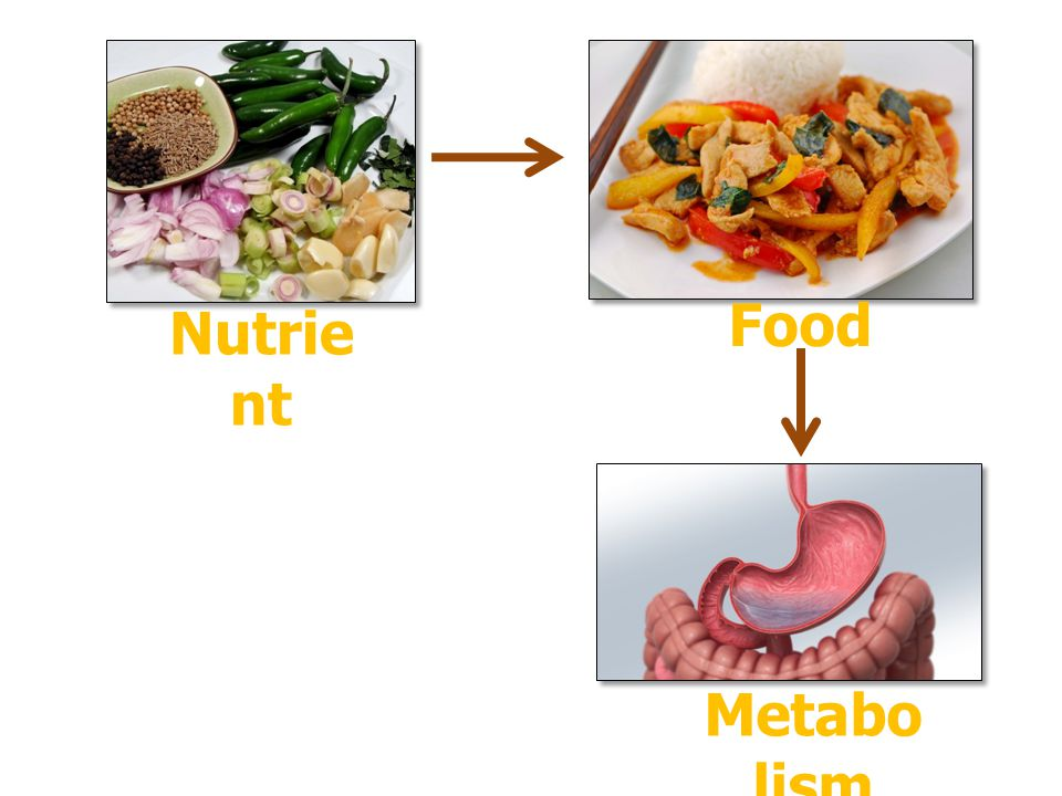 Food Nutrient Metabolism