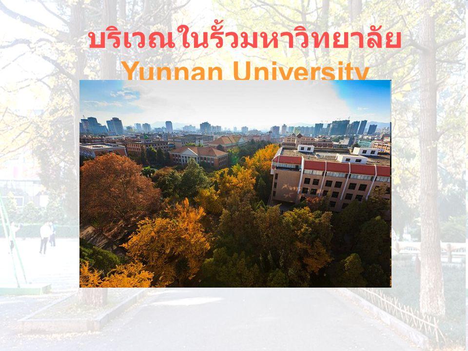 บริเวณในรั้วมหาวิทยาลัย Yunnan University