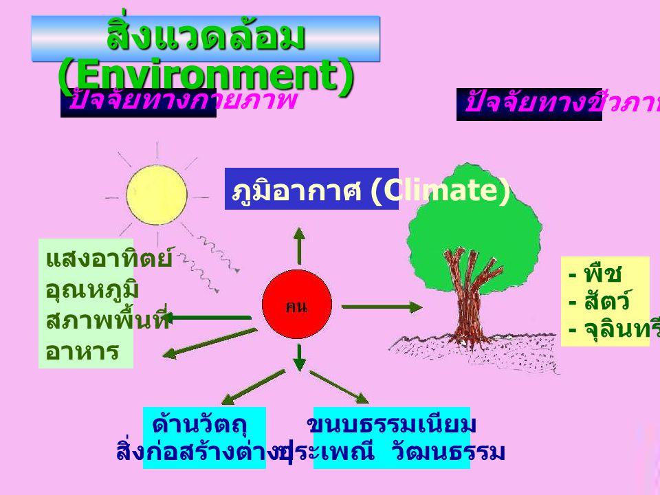 สิ่งแวดล้อม (Environment)