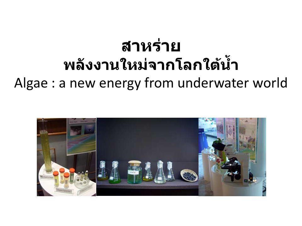 สาหร่าย พลังงานใหม่จากโลกใต้น้ำ Algae : a new energy from underwater world