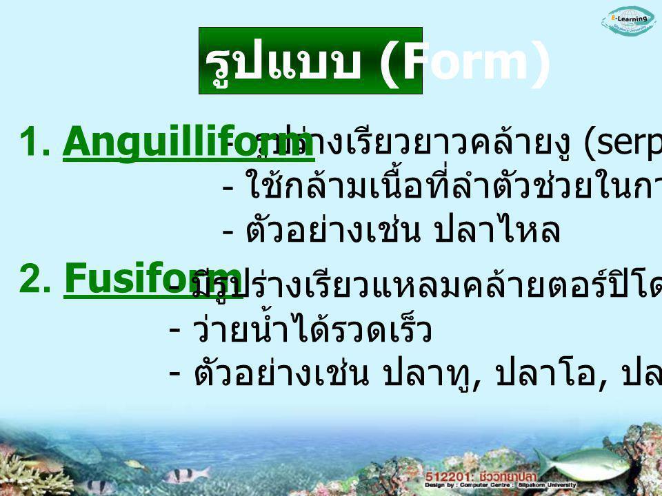 รูปแบบ (Form) 1. Anguilliform 2. Fusiform