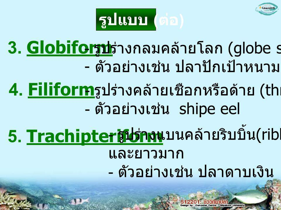 3. Globiform 4. Filiform 5. Trachipteriform รูปแบบ (ต่อ)