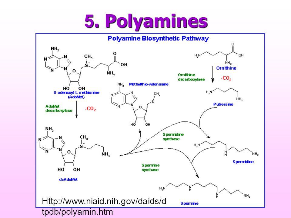 5. Polyamines Http://www.niaid.nih.gov/daids/dtpdb/polyamin.htm