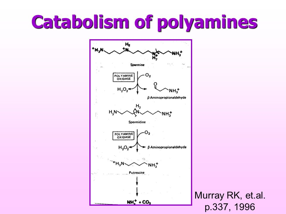 Catabolism of polyamines