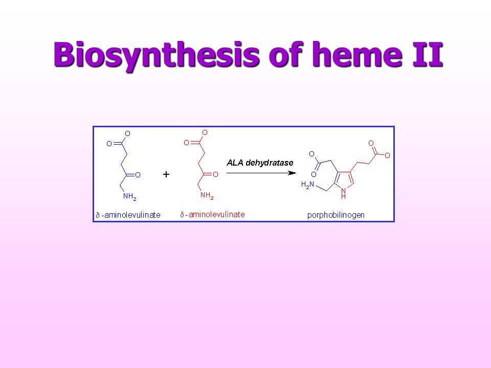 Biosynthesis of heme II