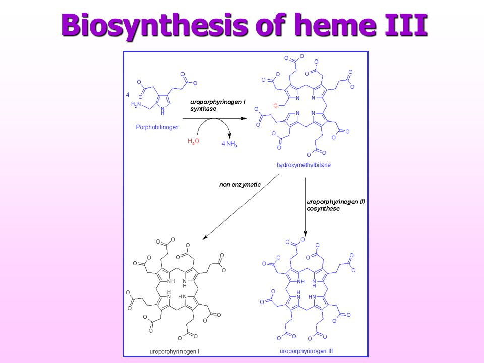 Biosynthesis of heme III