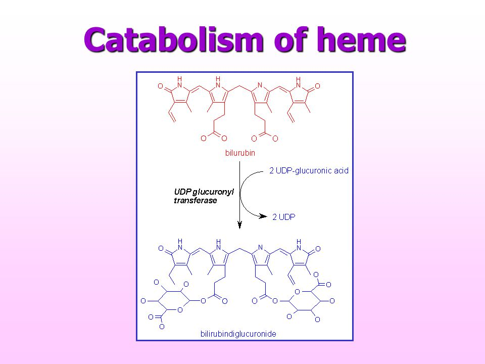 Catabolism of heme