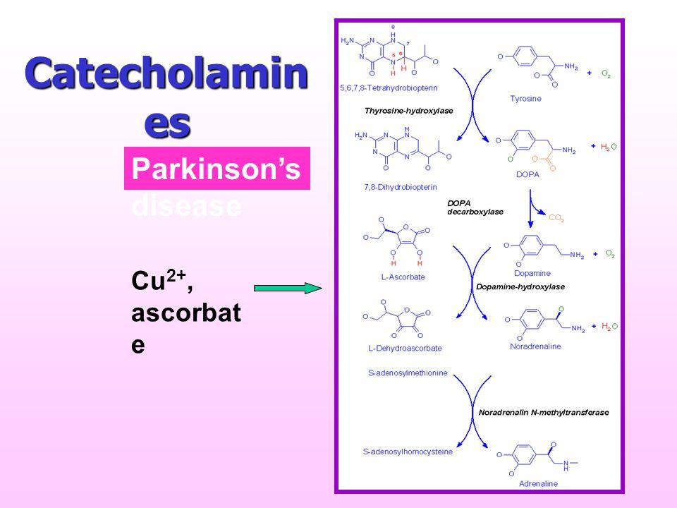 Catecholamines Parkinson's disease Cu2+, ascorbate