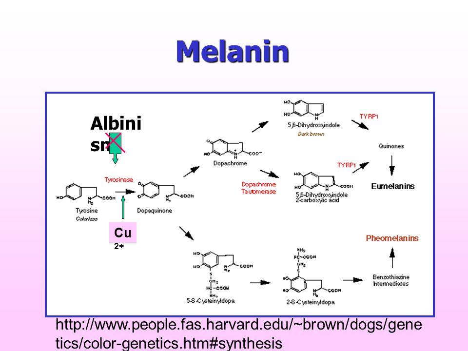 Melanin Albinism.