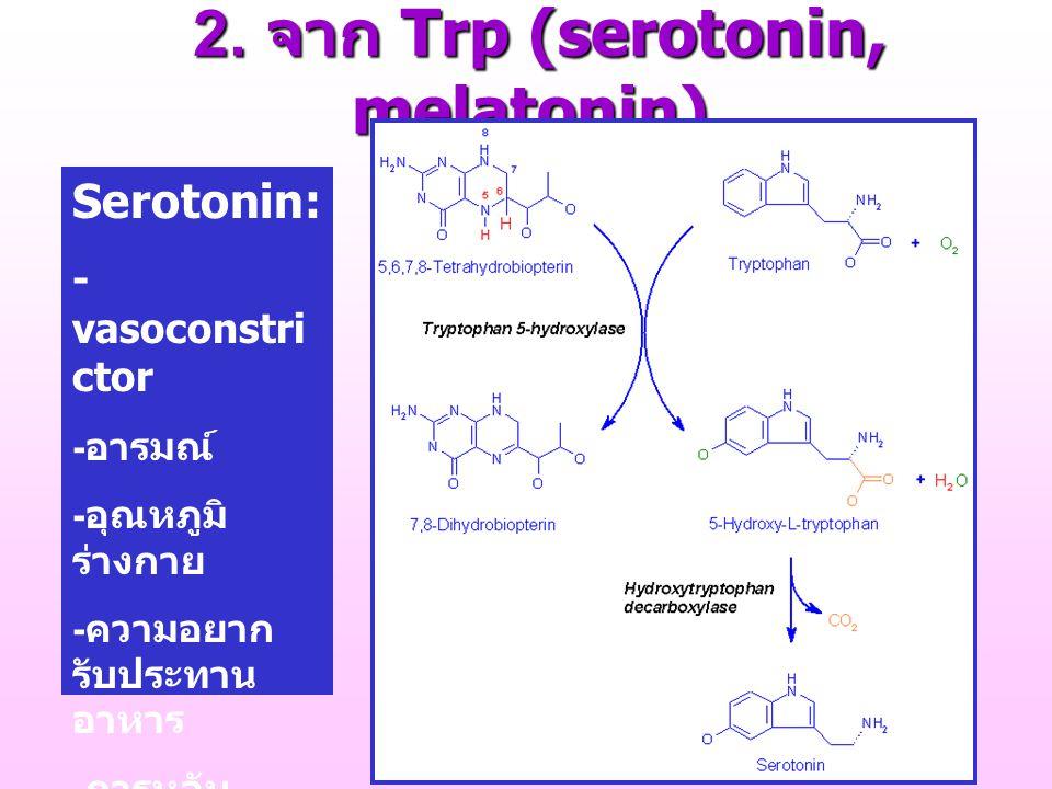 2. จาก Trp (serotonin, melatonin)