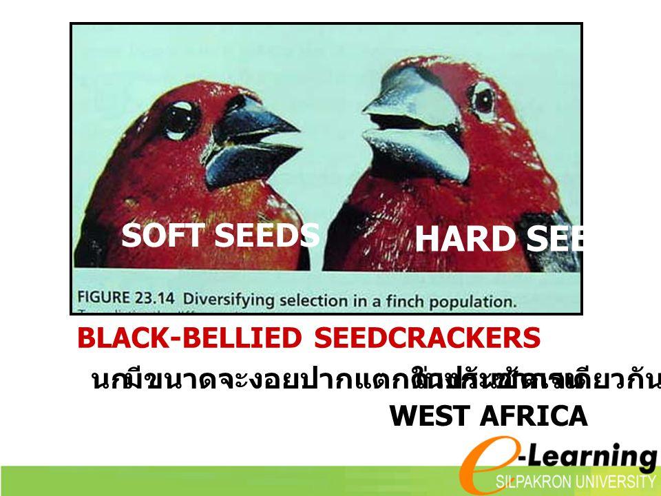 HARD SEEDS SOFT SEEDS นก มีขนาดจะงอยปากแตกต่างกันชัดเจน