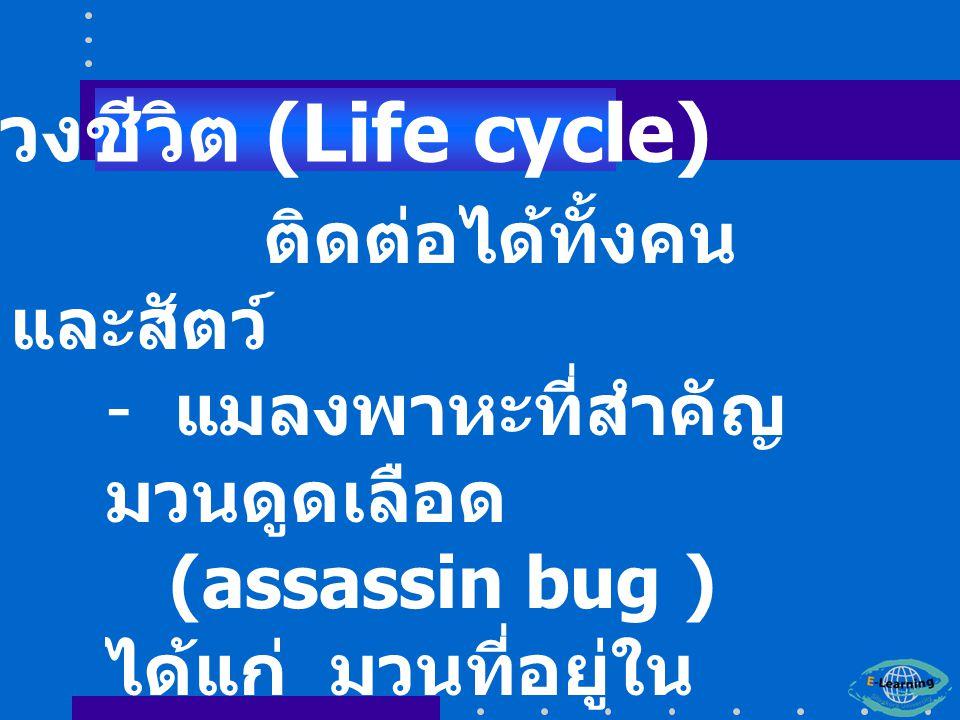 วงชีวิต (Life cycle) ติดต่อได้ทั้งคนและสัตว์