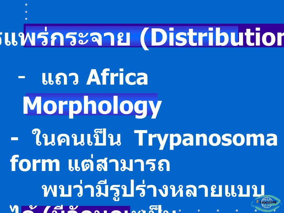 การแพร่กระจาย (Distribution)