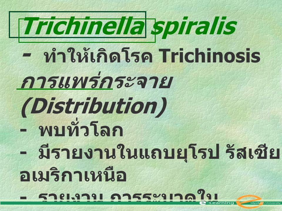 - ทำให้เกิดโรค Trichinosis