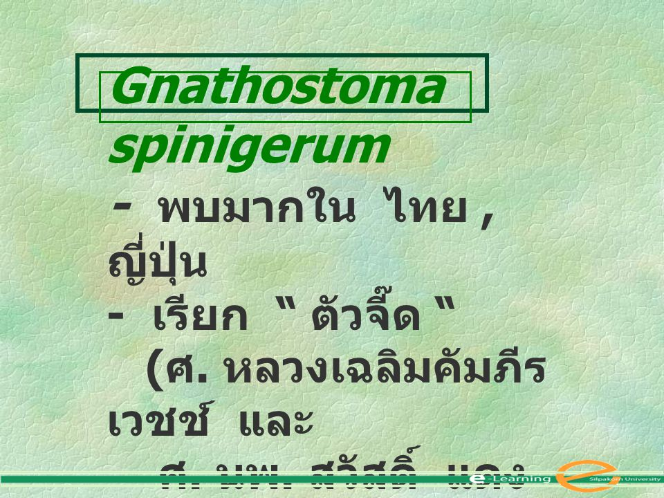 Gnathostoma spinigerum - พบมากใน ไทย , ญี่ปุ่น