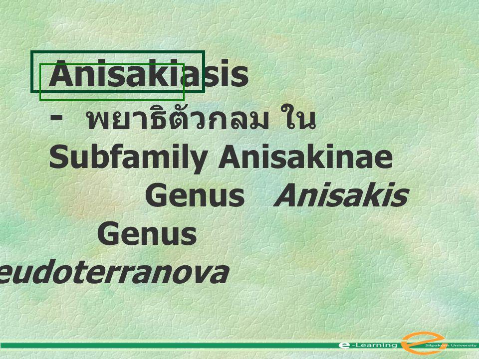- พยาธิตัวกลม ใน Subfamily Anisakinae