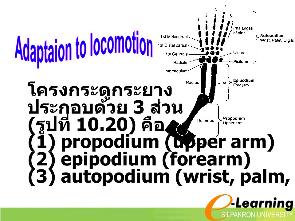 Adaptaion to locomotion