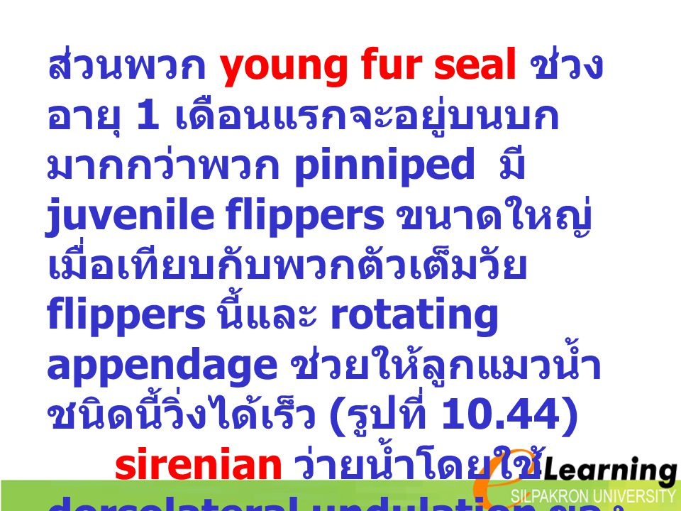 ส่วนพวก young fur seal ช่วงอายุ 1 เดือนแรกจะอยู่บนบกมากกว่าพวก pinniped มี juvenile flippers ขนาดใหญ่เมื่อเทียบกับพวกตัวเต็มวัย flippers นี้และ rotating appendage ช่วยให้ลูกแมวน้ำชนิดนี้วิ่งได้เร็ว (รูปที่ 10.44)