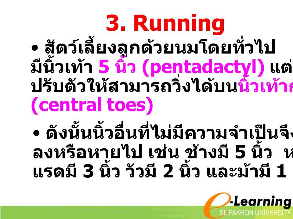 3. Running สัตว์เลี้ยงลูกด้วยนมโดยทั่วไป