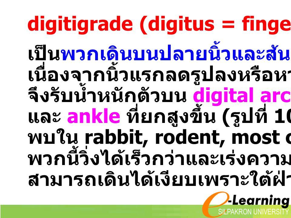 digitigrade (digitus = finger, gradus = walk)